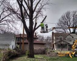 Photo #1: Tree Trimming/ Removal. Big Spring Discounts! Free Estimates!