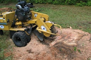 Photo #1: Northland and Eastern Stump removal / Stump grinding