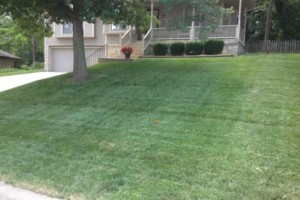 Photo #6: GRASSY PLAINS. HIRE U.S. VETERANS FOR YOUR LAWN CARE NEEDS!!!