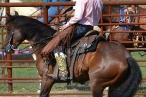 Photo #1: Horse Training & Tune Ups by Tyler Ayler