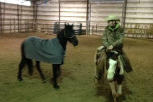 Photo #2: Horse Training & Tune Ups by Tyler Ayler
