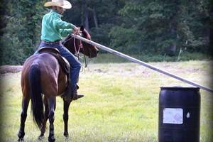 Photo #3: Horse Training & Tune Ups by Tyler Ayler