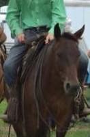 Photo #4: Horse Training & Tune Ups by Tyler Ayler