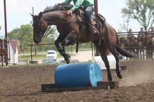 Photo #5: Horse Training & Tune Ups by Tyler Ayler