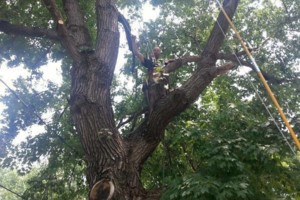 Photo #3: TREE TRIMMING AND REMOVAL. FREE ESTIMATES. AFFORDABLE PRICING!
