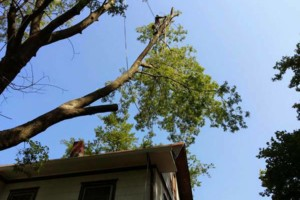 Photo #2: TREE TRIMMING AND REMOVAL. FREE ESTIMATES. AFFORDABLE PRICING!