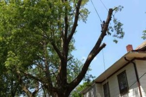 Photo #1: TREE TRIMMING AND REMOVAL. FREE ESTIMATES. AFFORDABLE PRICING!