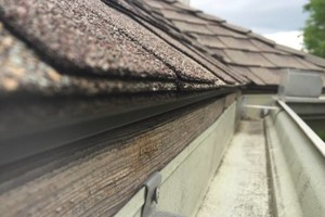 Photo #1: Gutter Cleaning - Landscape - Tree Trimming / Removal