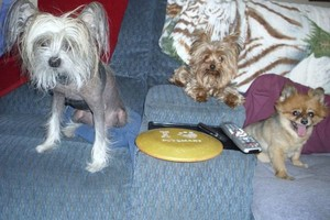 Photo #1: Dog Sitter Care by Caring Couple