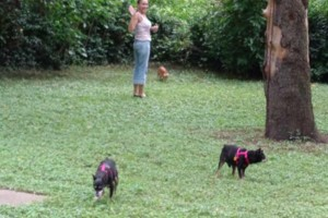 Photo #8: $15 - DOG BOARDING - $10 FOR 30 MIN. WALK - TAXI SERVICE ALSO