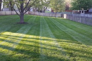 Photo #1: Noah's Lawn Care. MOWING $30