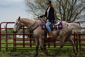 Photo #1: Horseback Riding Lessons and Equine Services