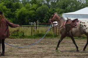 Photo #2: Horseback Riding Lessons and Equine Services