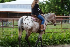 Photo #6: Horseback Riding Lessons and Equine Services