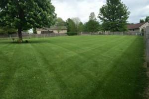 Photo #1: Lanier lawn care