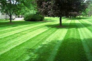 Photo #3: Affordable Lawn Care. Leaf Removal. Edging...