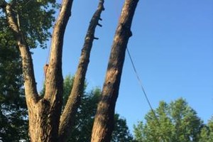 Photo #4: Tree And Limb Triming Work