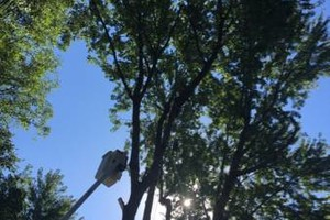 Photo #3: Tree And Limb Triming Work