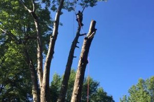 Photo #2: Tree And Limb Triming Work