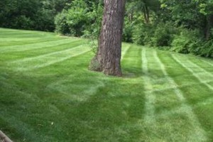 Photo #7: C&C Complete Lawn Care