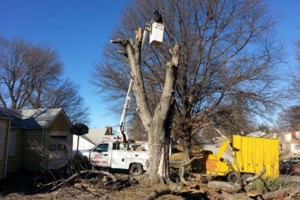 Photo #1: GET YOUR TREES TRIMMED OR REMOVED! NO JOB TO SMALL!