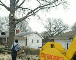 Photo #2: GET YOUR TREES TRIMMED OR REMOVED! NO JOB TO SMALL!