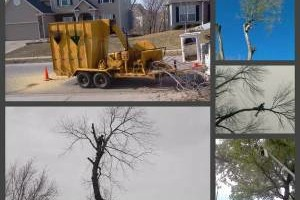 Photo #3: GET YOUR TREES TRIMMED OR REMOVED! NO JOB TO SMALL!