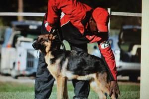Photo #1: Brelsford's K9 Academy. Dog Training/Boarding