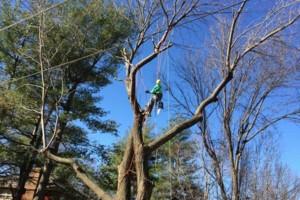 Photo #6: FULL TREE SERVICE - Dooley Bro's Lawn and Tree