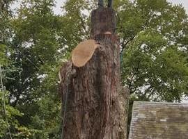 Photo #5: FULL TREE SERVICE - Dooley Bro's Lawn and Tree