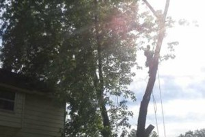 Photo #3: FULL TREE SERVICE - Dooley Bro's Lawn and Tree
