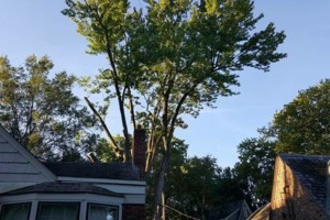 Photo #2: FULL TREE SERVICE - Dooley Bro's Lawn and Tree