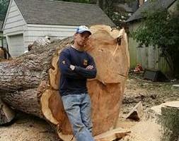 Photo #1: FULL TREE SERVICE - Dooley Bro's Lawn and Tree