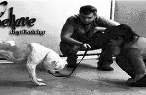 Photo #1: Kinda like super nanny for your dog! Dog Trainer