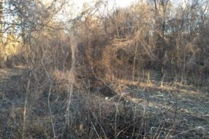 Photo #6: Land And Pasture Clearing