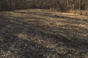 Photo #5: Land And Pasture Clearing