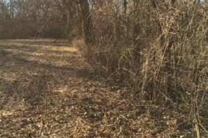 Photo #4: Land And Pasture Clearing