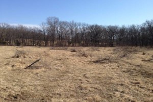 Photo #3: Land And Pasture Clearing