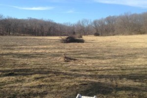 Photo #2: Land And Pasture Clearing