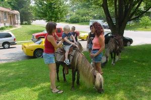 Photo #3: Pony Rides and Childrens Entertainment