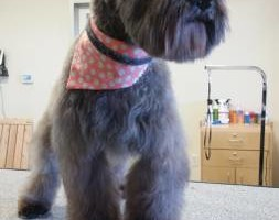 Photo #6: Sweetheart Special 30% Off Grooming! Two Dogs And Cat Pet Club