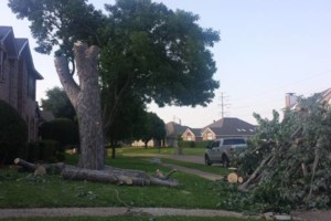 Photo #1: Rene Perez Tree Services