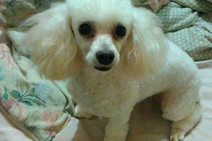Photo #1: DISCOUNT DOG GROOMING! QUALITY BEAUTIFUL GROOMING 4 LESS!