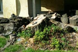 Photo #6: Tree Stump Grinding (have openings this week)
