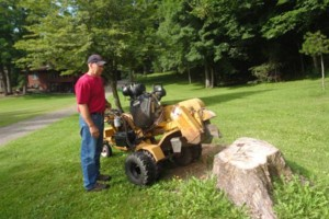 Photo #1: Bob's Stump Grinding