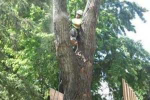 Photo #15: FREDY'S TREE SERVICES. FULLY INSURED! TREE TRIMMING AND REMOVAL