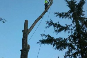 Photo #14: FREDY'S TREE SERVICES. FULLY INSURED! TREE TRIMMING AND REMOVAL