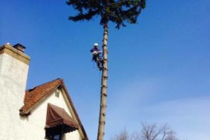 Photo #13: FREDY'S TREE SERVICES. FULLY INSURED! TREE TRIMMING AND REMOVAL