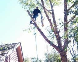 Photo #12: FREDY'S TREE SERVICES. FULLY INSURED! TREE TRIMMING AND REMOVAL