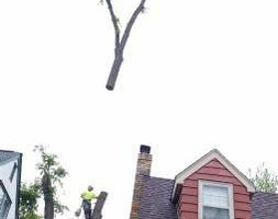 Photo #11: FREDY'S TREE SERVICES. FULLY INSURED! TREE TRIMMING AND REMOVAL